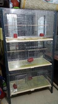 Mesh cages for various size for birds-Pets-Pet Services-Chennai
