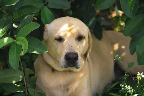 Dog Care Products and Dog Sanctuary & Rescue by vosd-Pets-Pet Services-Bangalore