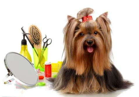 All types of Pet's Services available in Pune-Pets-Dog Training-Pune