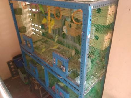 Birds cage-Pets-Pet Supplies-Chennai