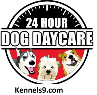 Kennels9 Offering Best Dog Boarding Services In ECIL-Pets-Pet Services-Hyderabad