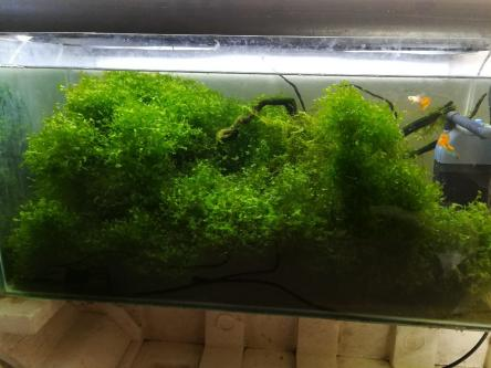Driftwood with moss for aquascaping.-Pets-Pet Supplies-Pune