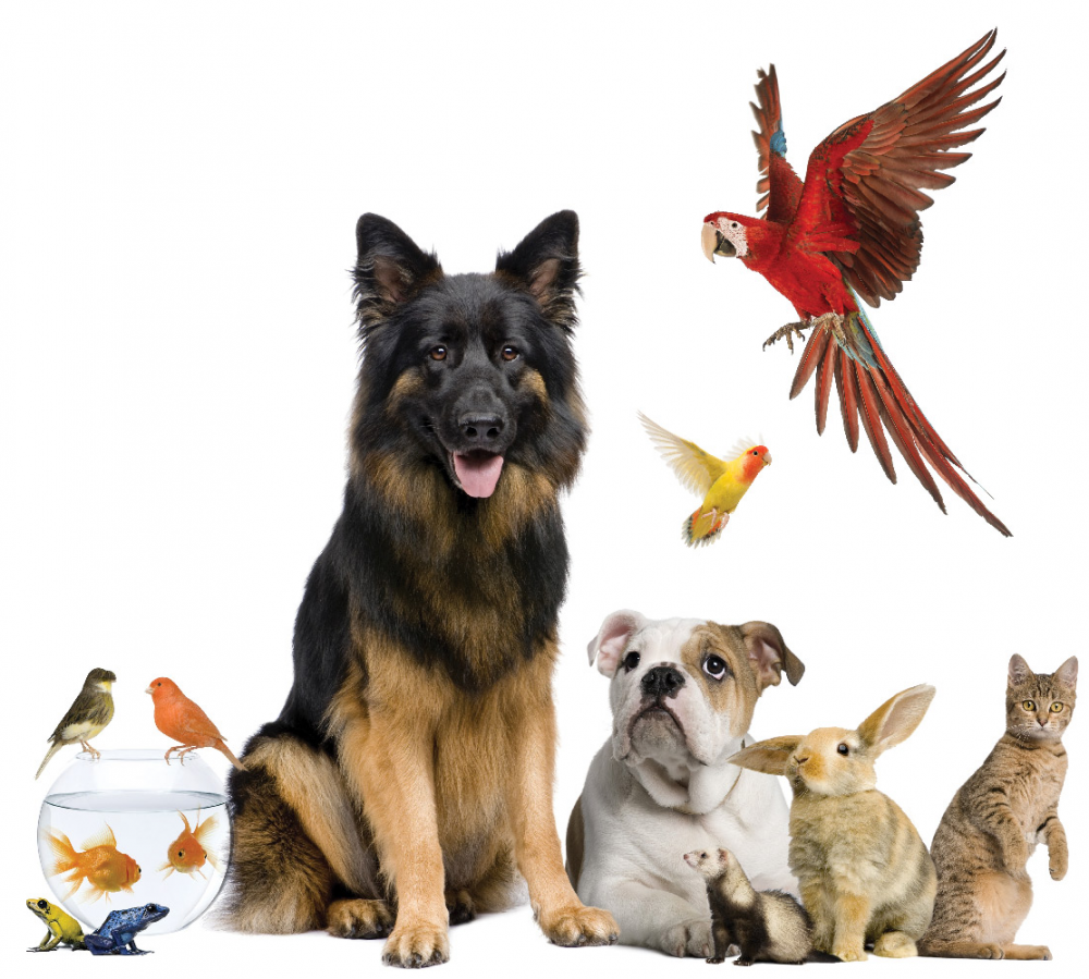 Buy pets online and Sell pets online-Pets-Pet Supplies-Indore