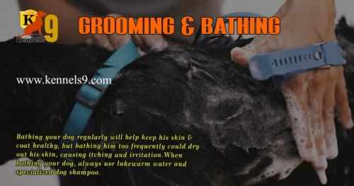 Kennels9 Offering Best Dog Grooming and Bathing Services In ECIL-Pets-Pet Services-Hyderabad