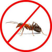 Crawling Insects Control in Hyderabad-Pets-Pet Services-Hyderabad