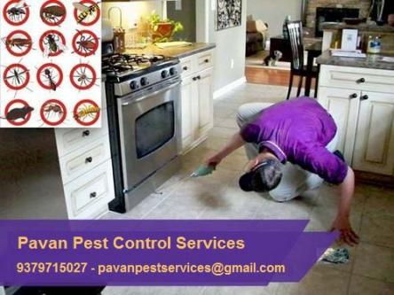 Fed up with bugs & insects, NEED HELP-Pets-Pet Services-Bangalore