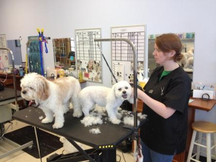 Dog Grooming in Hyderabad - Unikorn Pet Services India Pvt. Ltd.-Pets-Pet Services-Hyderabad