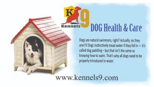 Dog Training Services Dogs Boarding & Training School Kennels9.com-Pets-Dog Training-Hyderabad