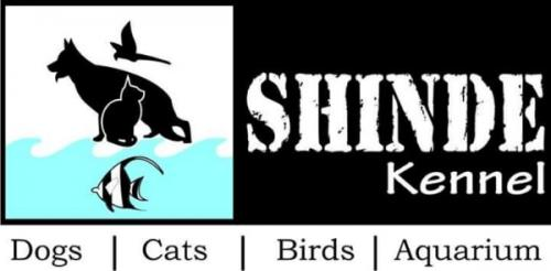 Dog trainers available all over Pune-Pets-Dog Training-Pune