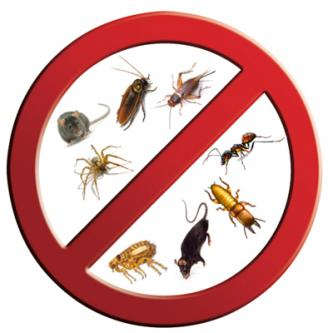 Flying Insects Treatment in Hyderabad-Pets-Pet Services-Hyderabad