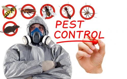 Best pest control and termite control in Gurgaon-Services-Home Services-Karnal