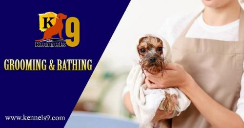 Dog Grooming Services In Hyderabad-Pets-Pet Services-Hyderabad