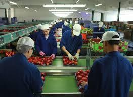 REQUIRE CANDIDATE FOR FOOD PACKING AND HOUSE KEEPING FOR SINGAPO-Jobs-Other Jobs-Karnal