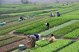 JOBS IN MALAYSIA PROFILE - GENERAL WORKERS IN AGRICULTURE FARM-Jobs-Other Jobs-Karnal