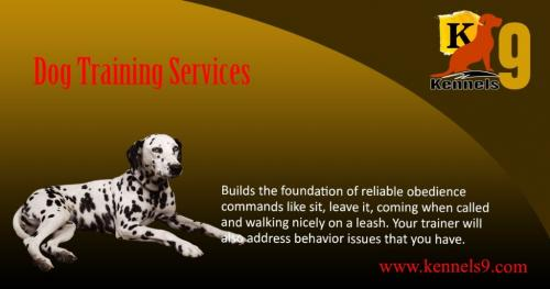 Kennels9 Offering Best Dog Training Services In ECIL-Pets-Dog Training-Hyderabad