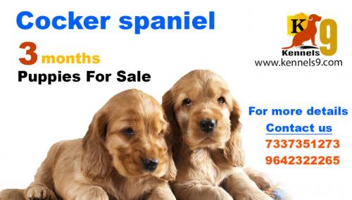 kennels9.com. We are Best Dog training center in Hyderabad-Pets-Dog Training-Hyderabad