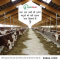 Corn silage For Sale-Pets-Pet Services-Patiala